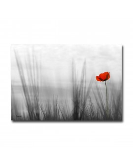 Tableau Photo Coquelicot