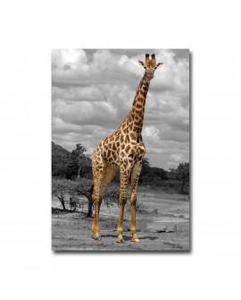 Tableau Photo Girafe