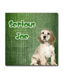 Plexiglass dog Joe Green