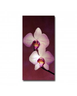 Plexiglass floral duo orchid