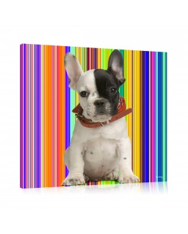Tableau chien Lucky rayures multi